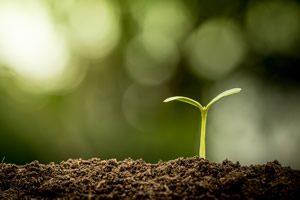 bioabfall küchenabfall Speisereste verarbeitet zu Kompost hergestellt mit dem Kompostiergerät von Oklin